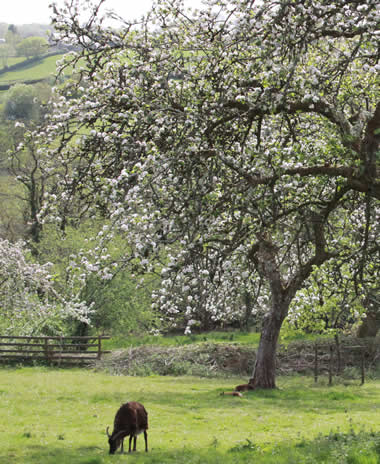 Orchard at Capeltor